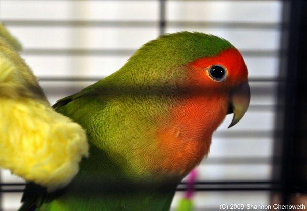 The Girl's Got Sole - Indy bird