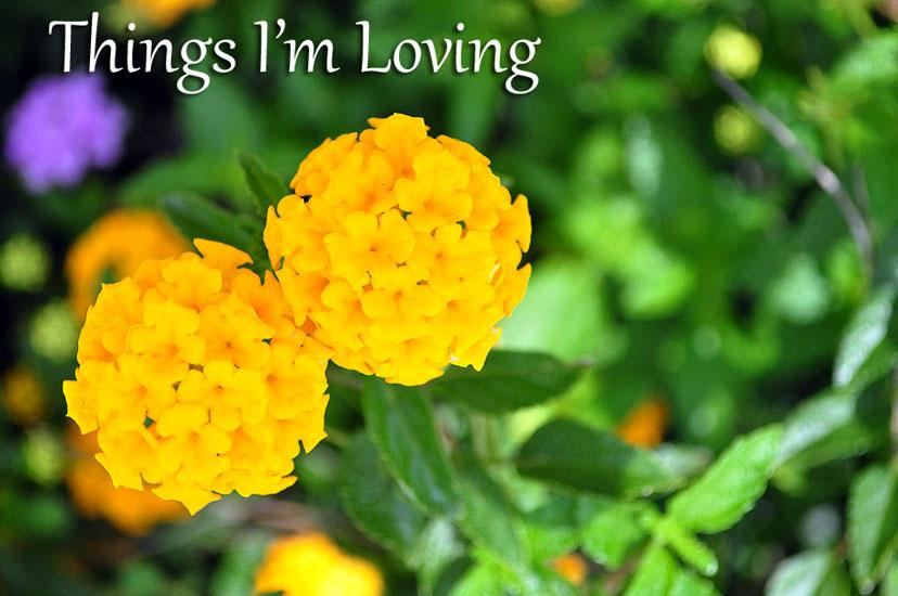 thingsloving1