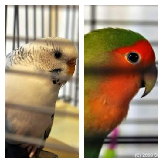 Angel & Indy, my feathered babies.