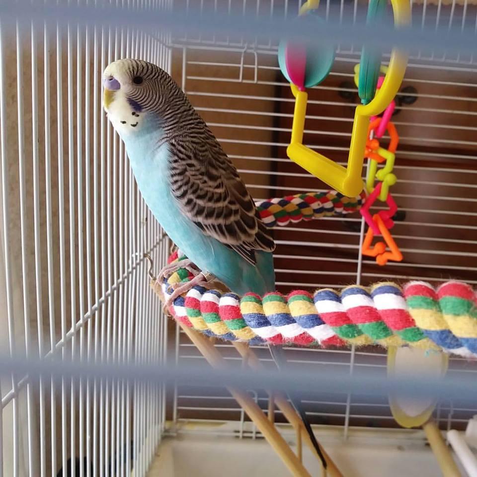 The Girl's Got Sole - Toby Mac bird