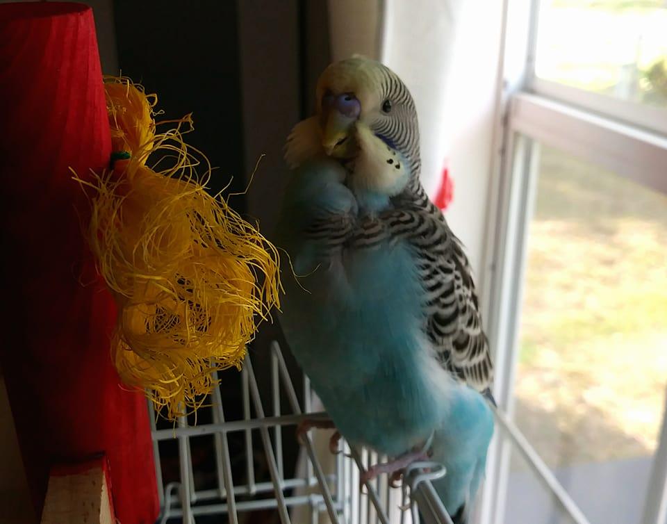 The Girl's Got Sole - Toby bird